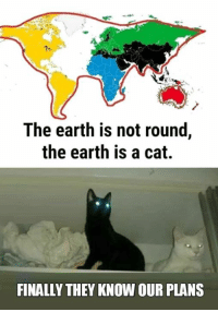 9gag, Dank, and Earth: The earth is not round,  the earth is a cat.  FINALLY THEY KNOW OUR PLANS The pure evil plans https://9gag.com/gag/aBWzEPO?ref=fbpic