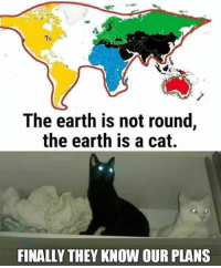 The pure evil plans. Follow @9gag 9gag cat world evilplan: The earth is not round  the earth is a cat.  FINALLY THEY KNOW OUR PLANS The pure evil plans. Follow @9gag 9gag cat world evilplan