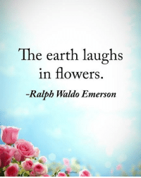 Memes, Earth, and Flowers: The earth laughs  in flowers  -Ralph Waldo Emerson The earth laughs in flowers. - Ralph Waldo Emerson powerofpositivity