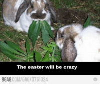 Crazy, Easter, and Happy: The easter will be crazy  GAG COM/GAG/3761324 Happy Easter!