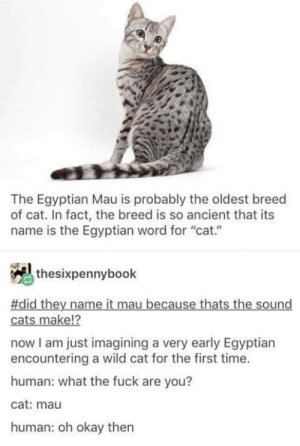 "Egyptian: The Egyptian Mau is probably the oldest breed  of cat. In fact, the breed is so ancient that its  name is the Egyptian word for ""cat.""  thesixpennybook  #did they name it mau because thats the sound  12  cats make!?  now I am just imagining a very early Egyptian  encountering a wild cat for the first time.  human: what the fuck are you?  cat: mau  human: oh okay then"
