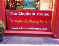 """Harry Potter, Memes, and Elephant: The Elephant House  irthplaceof Harry Potter  www.elephanthouse.biz  1 in 3 people will read this and go to  MUGGLENET MEMES.COM <p>I feel like I need to make a pilgrimage here. <a href=""""http://ift.tt/1phn3lH"""">http://ift.tt/1phn3lH</a></p>"""