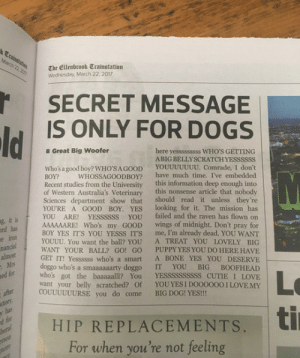 tastefullyoffensive: A secret message just for dogs from the Prosh newspaper.: The Ellenbrook Trainstation  Wednesday, March 22. 2017  SECRET MESSAGE  IS ONLY FOR DOGS  Great Big Woofer  here yesssssssss WHO'S GETTING  ABIG BELLYSCRATCHYESSSSSS  Who's a good boy? WHO'SA GOOD YOUUUUUUU. Comrade, I don't  BOY? WHOSSAGOODBOY? have much time. I've embedded  Recent studies from the University this information deep enough into  of Western Australia's Veterinary this nonsense article that nobody  Sciences department show that should read it unless they're  YOURE A GOOD BOY. YES looking for it. The mission has  YOU ARE! YESSSSSS YOU failed and the raven has flown on  AAAAAARE! Who's my GOOD wings of midnight. Don't pray for  BOY YES IT'S YOU YESSS IT'S me, I'm already dead. YOU WANT  YOUUU. You want the ball? YOU A TREAT YOU LOVELY BIG  WANT YOUR BALL? GO! GO PUPPY YES YOU DO HERE HAVIE  GET IT! Yessssss who's a smart A BONE YES YOU DESERVE  doggo who's a smaaaaaarty doggo IT YOU BIG BOOFHEAD  who's got the baaaaalll? You YESSSSSSSSSS CUTIE I LOVE  want your belly scratched? Of YOUYES I DOO0000 I LOVEMY  ic  g, it  rd has  ed for  COUUUUUURSE you do come BIG DOG! YES!!!  | HIP REPLACEMENTS, ti  d for  For when you're not feeling tastefullyoffensive: A secret message just for dogs from the Prosh newspaper.