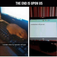 Dank, 🤖, and Ref: THE END IS UPON US  communism will prevail  Oh  i wonder what my hamster will type This is how Animal Farm begins. http://9gag.com/gag/a1bZ8OY?ref=fbp