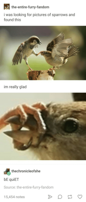 Pictures, Quiet, and Silence: the-entire-furry-fandom  i was looking for pictures of sparrows and  found this  im really glad  thechronicleofshe  NO  bE quiET  Source: the-entire-furry-fandom  15,454 notes Silence