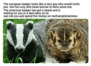 Money, American, and Europe: The european badger looks like a nice guy who would invite  you into his cozy and clean burrow to have some tea  The american badger has got a shank and is  waiting for you in a dark alley so he  can rob you and spend the money on methamphetamines Stay in Europe