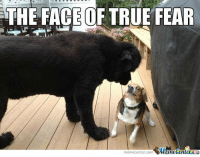 Memes, True, and Fear: THE FACE OF TRUE FEAR  memecenter.com emetenterG When you face the boss while you are still underleveled...