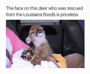 Deer, Louisiana, and Who: The face on this deer who was rescued  from the Louisiana floods is priceless Priceless expression