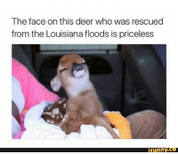 Deer, Louisiana, and Girl Memes: The face on this deer who was rescued  from the Louisiana floods is priceless  ifunny.co