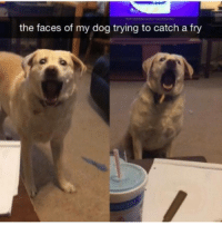 Memes, Big Boy, and Big Boys: the faces of my dog trying to catch a fry me me big boy