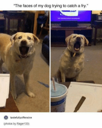 "Last one! Night y'all! (Check link in bio!) funnyfriday funnytumblr tumblr funny tumblrtextpost funnytumblrtextpost funny haha humor hilarious: The faces of my dog trying to catch a fry.""  to  tastefullyoffensive  (photos by Rager133) Last one! Night y'all! (Check link in bio!) funnyfriday funnytumblr tumblr funny tumblrtextpost funnytumblrtextpost funny haha humor hilarious"