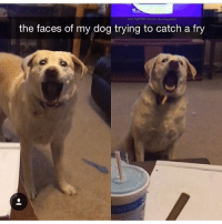 Memes, Butterfly, and Antisocial: the faces of my dog trying to catch a fry Follow my other accounts @antisocialtv @lola_the_ladypug @x__antisocial_butterfly__x