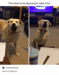 """- Spongecave Manbob: """"The faces of my dog trying to catch a fry.""""  to  tastefully offensive  (photos by Rager 133) - Spongecave Manbob"""