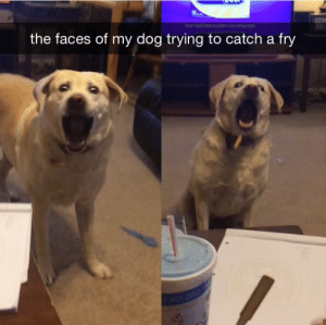 stability:  (Via Rager133) : the faces of my dog trying to catch a fy stability:  (Via Rager133)