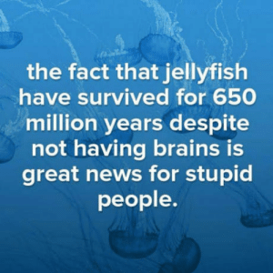 Brains, News, and Jellyfish: the fact that jellyfish  have survived for 650  million years despite  not having brains is  great news for stupid  people. Just saying