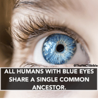 Tag someone with blue eyes 🔵: @The FACTSbible  ALL HUMANS WITH BLUE EYES  SHARE A SINGLE COMMON  ANCESTOR. Tag someone with blue eyes 🔵
