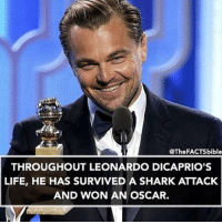 Memes, Shark, and Sharks: @The FACTSbible  THROUGHOUT LEONARDO DICAPRIO'S  LIFE, HE HAS SURVIVED A SHARK ATTACK  AND WON AN OSCAR. @thefactsbible is my favourite page right now!