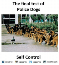 Twitter: BLB247 Snapchat : BELIKEBRO.COM belikebro sarcasm meme Follow @be.like.bro: The final test of  Police Dogs  Self Control  feDESIFUNDESIFUNDESIFUN DESIFUN.CoM  @DESIFUN ■ DESIFUN.COM Twitter: BLB247 Snapchat : BELIKEBRO.COM belikebro sarcasm meme Follow @be.like.bro