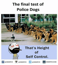 Be Like, Dogs, and Meme: The final test of  Police Dogs  That's Height  of  Self Control.  feDESIFUNDESIFUND  @DESIFUN DESIFUN.COM Twitter: BLB247 Snapchat : BELIKEBRO.COM belikebro sarcasm meme Follow @be.like.bro