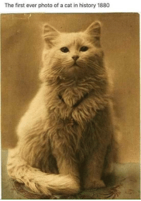 "masochist-incarnate:  fluffmugger:  catbountry: The beginning. actually IIRC this was the first photo with a specific type of camera or equipment  ""cos THE progenative shitlord of  cat memes was Harry Pointer. And around 1870 he decided that Au Naturelle  photos of cats weren't gonna cut it, and started doing shit like this:  then he realised HE COULD CAPTION THEM and thus the dignity of the feline was forever destroyed.    This is like, the oldest meme meme. Not the definition, but the definition we all know   This is it. The ultimate cat meme. You can all go home, the internet is over now. : The first ever photo of a cat in history 1880 masochist-incarnate:  fluffmugger:  catbountry: The beginning. actually IIRC this was the first photo with a specific type of camera or equipment  ""cos THE progenative shitlord of  cat memes was Harry Pointer. And around 1870 he decided that Au Naturelle  photos of cats weren't gonna cut it, and started doing shit like this:  then he realised HE COULD CAPTION THEM and thus the dignity of the feline was forever destroyed.    This is like, the oldest meme meme. Not the definition, but the definition we all know   This is it. The ultimate cat meme. You can all go home, the internet is over now."