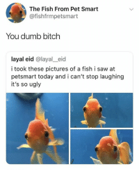 Bitch, Dumb, and Saw: The Fish From Pet Smart  @fishfrmpetsmart  You dumb bitch  layal eid @layal_eid  i took these pictures of a fish i saw at  petsmart today and i can't stop laughing  it's so ugly fuck humans