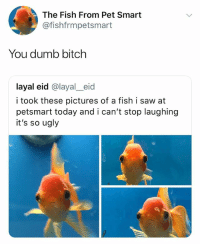 Bitch, Dumb, and Saw: The Fish From Pet Smart  @fishfrmpetsmart  You dumb bitch  layal eid @layal_eid  i took these pictures of a fish i saw at  petsmart today and i can't stop laughing  it's so ugly hey
