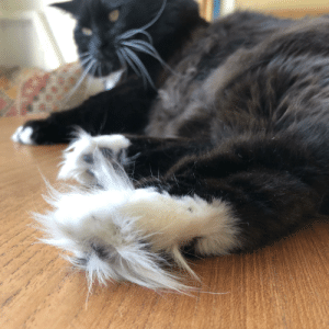 The floofiest paws, 1 out of 10 for traction: The floofiest paws, 1 out of 10 for traction