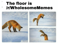 """<p>You guys are the best! via /r/wholesomememes <a href=""""http://ift.tt/2rNY0ge"""">http://ift.tt/2rNY0ge</a></p>: The floor is  /r/WholesomeMemes <p>You guys are the best! via /r/wholesomememes <a href=""""http://ift.tt/2rNY0ge"""">http://ift.tt/2rNY0ge</a></p>"""