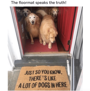 animalrates: A house full of golden retrievers. That would be heavenly. Would take them all with open arms. 12/10 for all doggos. via @thegoldenratio4 : The floormat speaks the truth!  JUST SO YOU KNOW  THERE SLIKE  A LOT OF DOGS IN HERE animalrates: A house full of golden retrievers. That would be heavenly. Would take them all with open arms. 12/10 for all doggos. via @thegoldenratio4