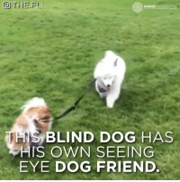 Dogs, Friends, and Memes: THE FLU  HIGHER PERSPECTIVE  THIS BLIND DOG HAS  HIS OWN SEEING  EYE DOG FRIEND. True friendship <3