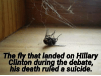 """Drugs, Head, and Hillary Clinton: The fly that landed on Hillary  Clinton during the debate.  his death ruled a suicide. BREAKING NEWS: """"A fly was found dead today of multiple gunshot wounds to the back of the head in what officials are calling a drug-fueled suicide.""""  The flys next of kin reported that the fly showed no such impulses to do such a thing, that the last they heard he was living life to the fullest just trying to suck on the biggest turd he had ever seen. He was hoping to be a legend after the attempt, he was just twenty-one hours old."""