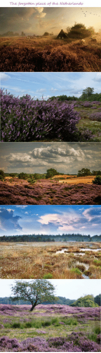 Netherlands, The Forgotten, and The Netherlands: The forgotten place of the Netherlands <p>The Most Magical Place In The Netherlands.</p>