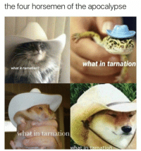 the four horsemen of the apocalypse  what in tarnation  what in tarnation?  what in tarnation  what nn tarnation me irl