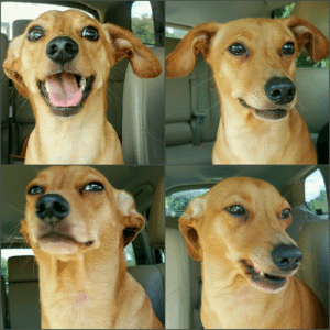 Another, Dog, and Him: The four phases of him finding out I pet another dog.