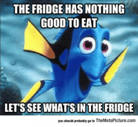 Tumblr, Blog, and Good: THE FRIDGE HAS NOTHING  GOOD TO EAT  LET'S SEE WHAT'S IN THE FRIDGE  you should probably go to TheMetaPicture.com epicjohndoe:  I Just Realized I'm Basically Dory