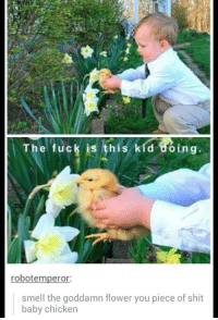 Shit, Smell, and Chicken: The fuck is this kid doing  robotemperor:  smell the goddamn flower you piece of shit  baby chicken WHY CAN'T WE ALL JUST GET ALONG?