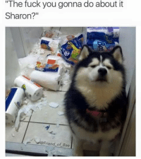 """me irl: """"The fuck you gonna do about it  Sharon?  Friend of Bae me irl"""