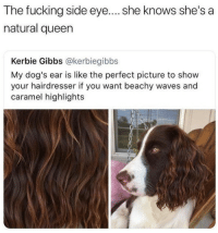 hairdresser: The fucking side eye.... she knows she's a  natural queen  Kerbie Gibbs @kerbiegibbs  My dog's ear is like the perfect picture to show  your hairdresser if you want beachy waves and  caramel highlights