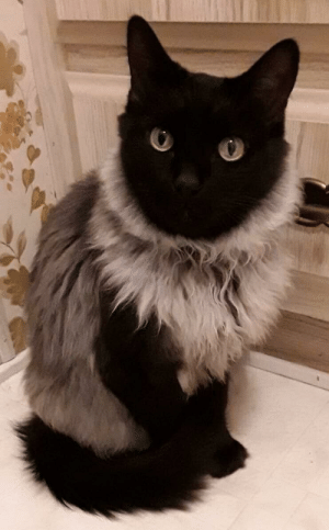 Fur, Look, and Like: The fur makes it look like she's wearing a sweater