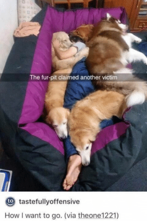 29 Hilarious Dog Memes and Pictures #memes #dogs #funny #humor #funnyanimals See the funniest dog memes and pictures here as doggos and puppers do what they always do and be adorable! #cuteanimalmemes #funnyanimalsmemes: The fur-pit claimed another victim  tastefullyoffensive  How I want to go. (via theone1221) 29 Hilarious Dog Memes and Pictures #memes #dogs #funny #humor #funnyanimals See the funniest dog memes and pictures here as doggos and puppers do what they always do and be adorable! #cuteanimalmemes #funnyanimalsmemes