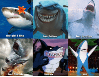 Friends, Funny, and Shark: the girl I like  her father  her brother  her friends  her ex  me Shark romance isn't easy