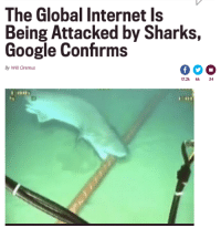"""Fucking, Google, and Internet: The Global Internet Is  Being Attacked by Sharks,  Google Confirms  By Will Oremus  17.2k 6k  34 <p><a class=""""tumblr_blog"""" href=""""http://themidnitespookshow.tumblr.com/post/118440617766"""" target=""""_blank"""">themidnitespookshow</a>:</p><blockquote> <p><a class=""""tumblr_blog"""" href=""""http://warning--known--fangirl.tumblr.com/post/117765345215"""" target=""""_blank"""">warning–known–fangirl</a>:</p> <blockquote> <p><a class=""""tumblr_blog"""" href=""""http://septembriseur.tumblr.com/post/95077544859"""" target=""""_blank"""">septembriseur</a>:</p> <blockquote> <p>No headline will ever bring me as much joy as this.</p> </blockquote> <p>*WiFi goes out*<br/>Those fucking sharks again I swear</p> </blockquote> <p>fuckin' SJWs! (Sharks that Jam Wifi)</p> </blockquote>"""
