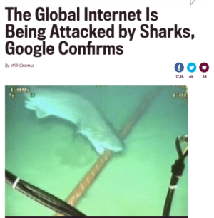 Fucking, Google, and Internet: The Global Internet Is  Being Attacked by Sharks,  Google Confirms  By Will Oremus  17.2k 6k  34 themidnitespookshow:  warning–known–fangirl:  septembriseur:  No headline will ever bring me as much joy as this.  *WiFi goes out*Those fucking sharks again I swear  fuckin' SJWs! (Sharks that Jam Wifi)