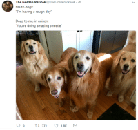 """in unison: The Golden Ratio 4 @TheGoldenRatio4 2h  Me to dogs:  Trm tviij a rugh diy  Dogs to me, in unison:  """"You're doing amazing sweetie"""