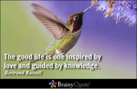 Memes, Hummingbird, and Bertrand Russell: The good life is one inspired by  love and guided by knowledge.  Bertrand Russell  Brainy  Quote The good life is one inspired by love and guided by knowledge. - Bertrand Russell https://www.brainyquote.com/quotes/authors/b/bertrand_russell.html #brainyquote #QOTD #love #knowledge #inspiration #hummingbird