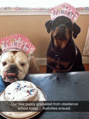 tastefullyoffensive:  [bunzilla] : The  GRADUATE  2014  2014  PRINCESS  Our new puppy graduated from obedience  school today.....festivities ensued. tastefullyoffensive:  [bunzilla]