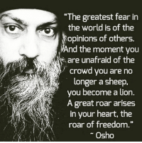 "Memes, Heart, and Lion: ""The greatest fear in  the world is of the  opinions of others.  And the moment you  are unafraid of the  crowd you are no  longer a sheep,  you become a lion.  A great roar arises  in your heart, the  roar of freedom  Osho Truth☝"