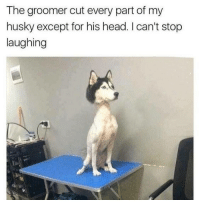 lmao why tho! • • • • • meme memes lmao comedy hilarious humor haha laugh textpost lmfao dankmemes relatable nochill jokes textposts dank savage joke funnytumblr tumblrtextpost crazy vine laughing funnyshit funnymemes tumblrpost cringe tumblrfunny funnypictures filthyfrank: The groomer cut every part of my  husky except for his head. I can't stop  laughing lmao why tho! • • • • • meme memes lmao comedy hilarious humor haha laugh textpost lmfao dankmemes relatable nochill jokes textposts dank savage joke funnytumblr tumblrtextpost crazy vine laughing funnyshit funnymemes tumblrpost cringe tumblrfunny funnypictures filthyfrank