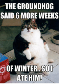 Memes, 🤖, and Groundhog: THE GROUNDHOG  SAID MORE WEEKS  ATE HIM! For more cute pics LIKE us at The Purrfect Feline Page
