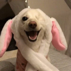 Dog, Happiest, and The: the happiest dog